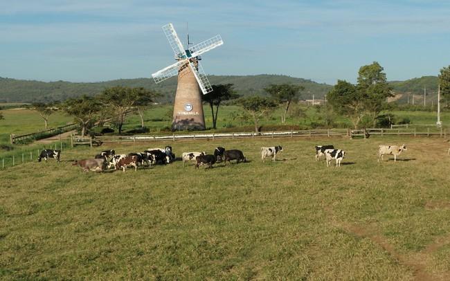 Khám phá trang trại Vinamilk Organic chuẩn châu Âu trên cao nguyên Đà Lạt
