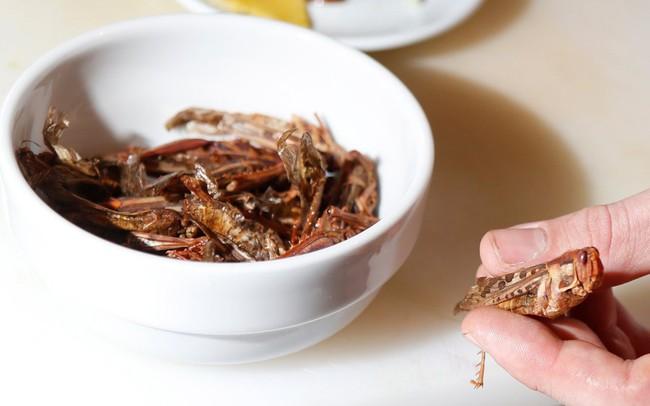 Ngành kinh doanh trị giá 8 tỷ USD từ... côn trùng!