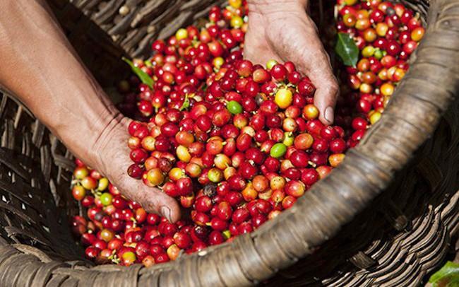 Làm gì để cà phê Việt chinh phục các thị trường khó tính?