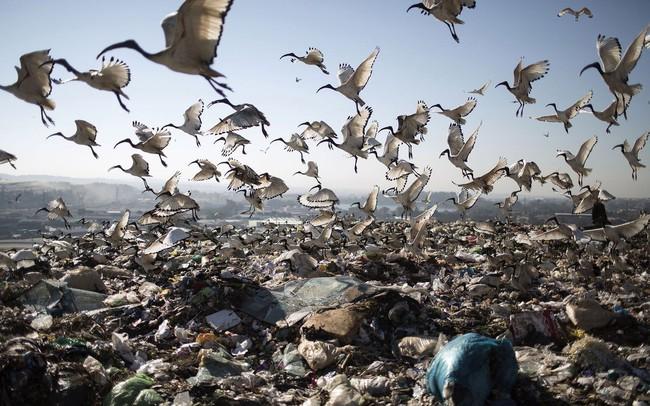 2 tỷ tấn rác thải và bài toán đau đầu ám ảnh các nước giàu