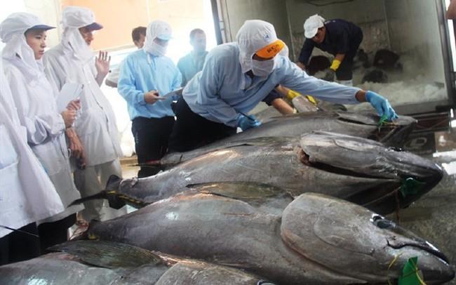Cá ngừ Việt Nam đang đi sâu vào thị trường Canada