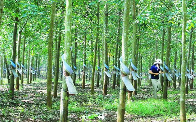 Cao su Tân Biên – Kampong Thom (TKR): Quý 2 thoát lỗ nhờ nguồn thu tài chính