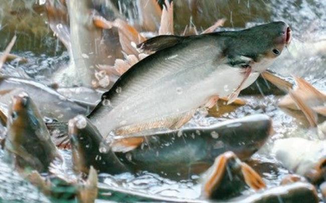 Thủy sản Nam Việt (ANV) báo lãi 353 tỷ đồng nửa đầu năm, tăng 82% so với cùng kỳ