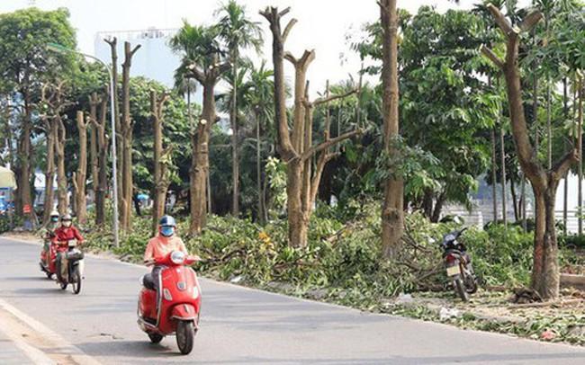 Hà Nội đánh chuyển hoa sữa trên tuyến phố Trích Sài theo ý kiến dân