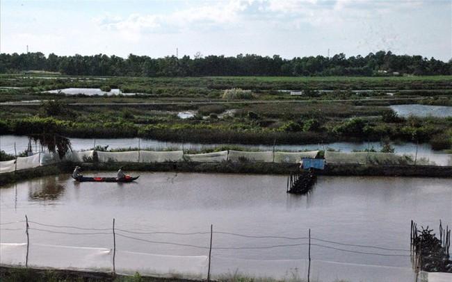 Thời tiết cực đoan khiến 5.300ha tôm chết, người nuôi thiệt hại nặng nề