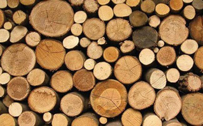 Xuất khẩu gỗ và sản phẩm gỗ mang về hơn 4 tỷ USD trong nửa đầu năm 2019