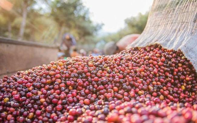 Nông dân găm hàng, giá cà phê tăng mạnh