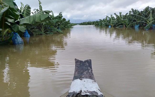 Thêm một cái hạn chưa từng có HAGL Agrico (HNG): 1.500 ha trái cây sắp thu hoạch tại Lào đang bị ngập lụt nặng nề - ảnh 1