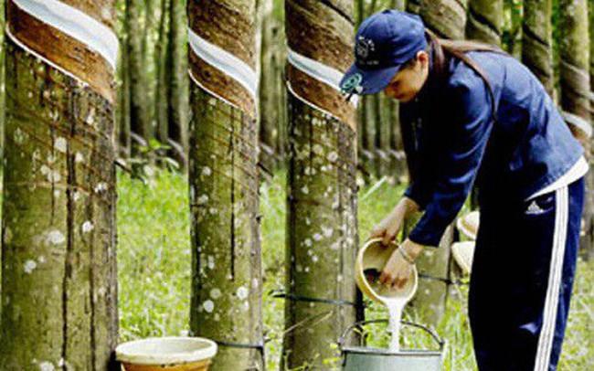 Trung Quốc là thị trường xuất khẩu cao su lớn nhất của Việt Nam