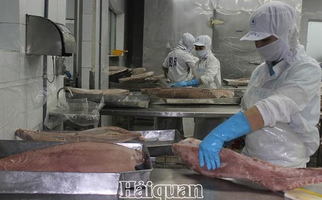 Xuất khẩu cá ngừ sang Hy Lạp tăng đột biến