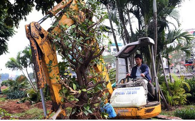 Ngày đêm chuyển cây, xén giải phân cách mở rộng vành đai 2, 3 ở Hà Nội