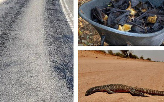 Cả thế giới đón mùa đông lạnh căm, riêng Úc chịu cảnh nắng nóng 50 độ, chảy cả nhựa đường