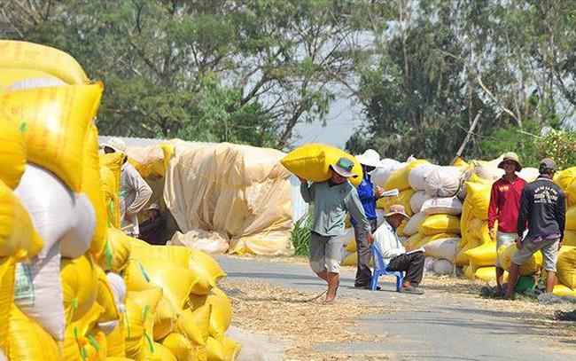 Xuất khẩu gạo đứng đầu thế giới, dân vẫn nghèo