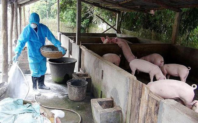 FAO cảnh báo gì Việt Nam về dịch tả lợn châu Phi?