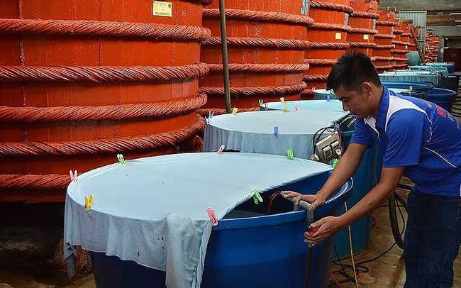 Thông tin mới nhất vụ nước mắm truyền thống cầu cứu Chính phủ