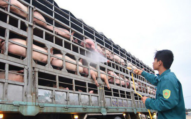 Đối phó dịch bệnh tả lợn châu Phi: Đã lên phương án nhập khẩu từ Mỹ, Úc, Hàn…