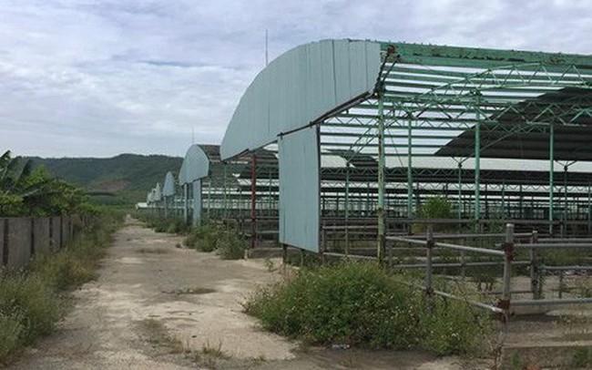Định giá dự án chăn nuôi bò hơn 4.000 tỉ liên quan đến cha con ông Bắc Hà