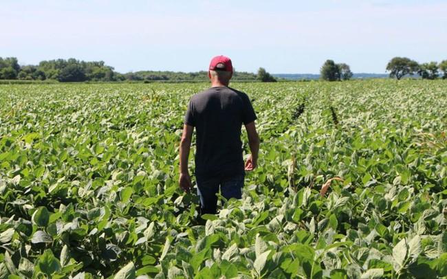 'Cơn đau dai dẳng' của nông dân Mỹ trong cuộc chiến thương mại với Trung Quốc - ảnh 1