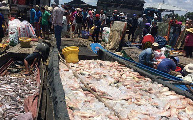 Đồng Nai: Hàng trăm tấn cá phơi bụng trên sông - ảnh 1