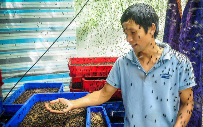 Chàng kỹ sư Sài Gòn bỏ việc về quê nuôi ruồi, doanh thu 80 triệu đồng/tháng: Từng bị gia đình phản đối, bạn bè cười nhạo