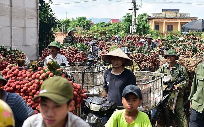 Chôn chân dưới trời nắng tại thủ phủ vải thiều Bắc Giang