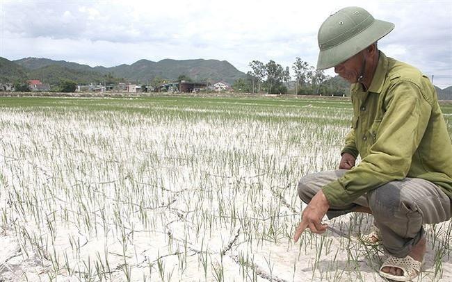 Nắng nóng gay gắt, gần 12.500 ha ở Nghệ An 'khát nước'