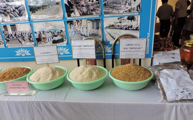 Xuất khẩu nông sản: Tận dụng cơ hội trong thách thức