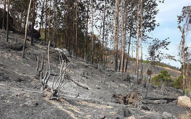Ảnh: Xót xa rừng Quảng Nam chìm trong biển lửa suốt 22 tiếng, 107 ha keo bị thiêu rụi