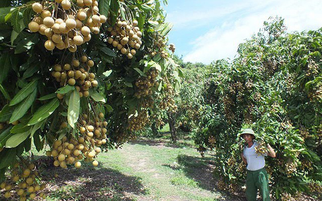 Trái cây được mùa, giá cao ngất ngưởng giữa chính vụ