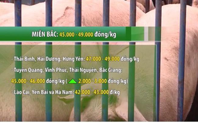 Giá lợn tăng mạnh, cán mốc 49.000 đồng/kg