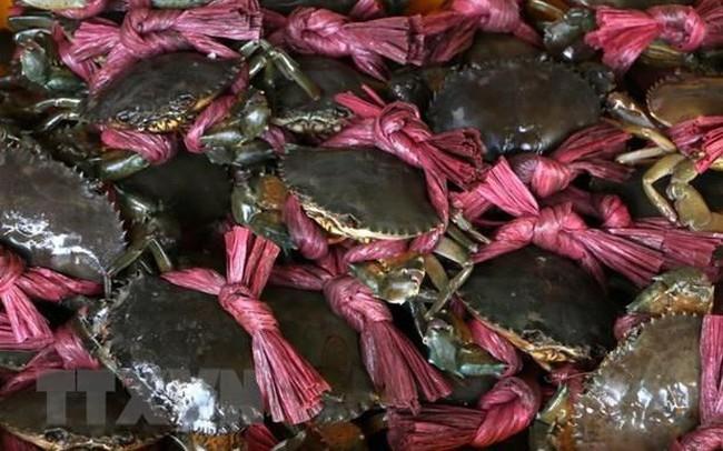 Nông dân Trà Vinh phấn khởi vì giá cua biển liên tục tăng cao - ảnh 1