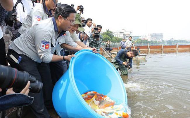 Clip: Thả 100 con cá Koi Nhật Bản xuống đoạn sông Tô Lịch làm sạch và Hồ Tây