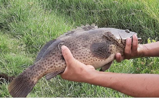 Khám phá nghề nuôi cá lồng bè thu tiền tỷ ở Nam Du