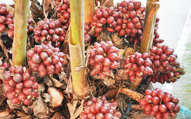Người dân thu hàng trăm tỷ đồng mỗi năm nhờ thảo quả