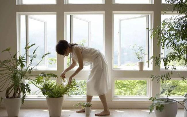 Muốn nhà sạch sẽ, trong lành lại may mắn, phát tài đừng bỏ qua các loại cây phong thủy sau