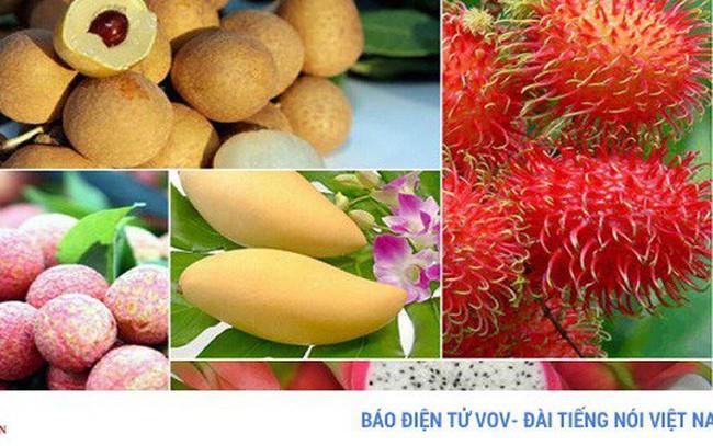 Chuyên gia kinh tế chỉ ra nhiều điểm nghẽn của nông sản Việt