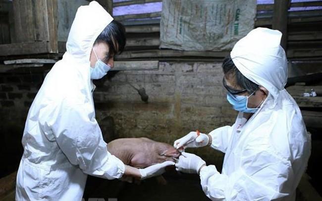 An Giang hỗ trợ gần 3.000 con lợn giống cho người dân tái đàn - ảnh 1