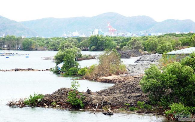Thu hồi quyết định giao đất dự án nghìn tỷ ở đầm Thị Nại - ảnh 1