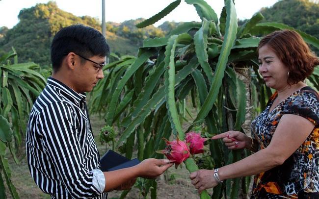 Thanh long ruột đỏ giúp nhiều người dân Sơn La thoát nghèo