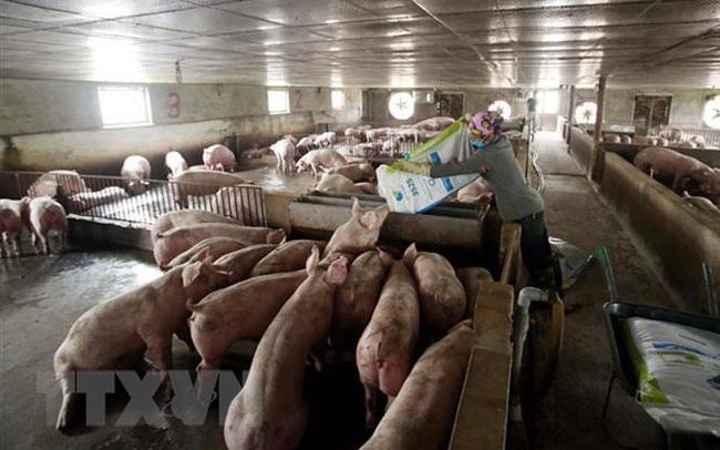Tổng cục Hải quan đưa ra nhiều giải pháp chống xuất lậu lợn