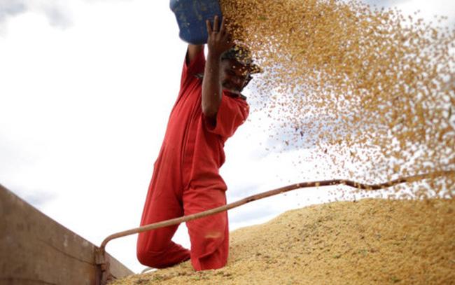 Trung Quốc nhập khẩu ồ ạt đậu tương Mỹ