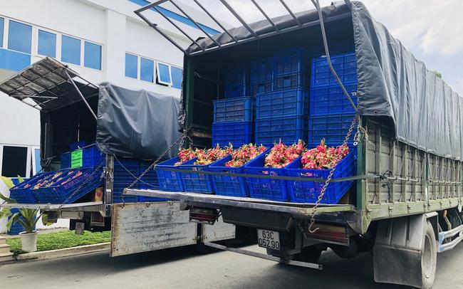 Nông sản thanh long 'ứ đọng' hơn 30.000 tấn trước dịch virus Corona: Nhiều doanh nghiệp, ngân hàng, tổ chức tham gia giải cứu