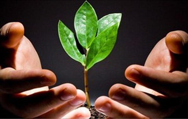 Quỹ mở gọi vốn và vai trò CTCK
