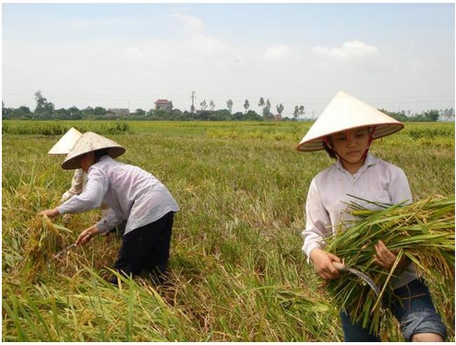 Thu hút FDI vào nông nghiệp: Cơ hội lớn từ TPP và Nhật Bản