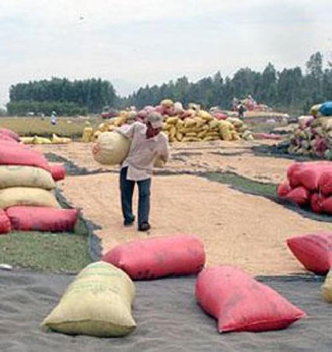 Kiến nghị xem lại chính sách thuế xuất khẩu gạo