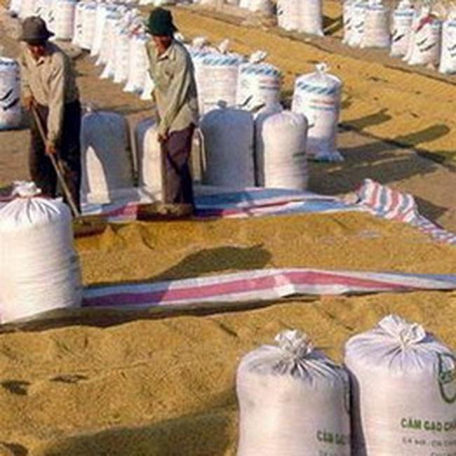 Kiến nghị được vay vốn để tăng giá thu mua lúa