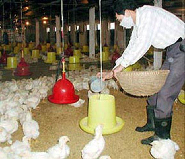 Giảm thuế nhập khẩu nguyên liệu thức ăn chăn nuôi
