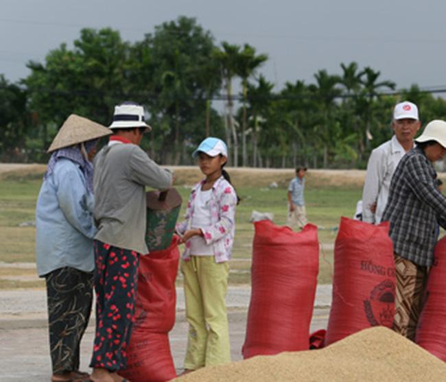 Trước khi ký hợp đồng xuất khẩu gạo vẫn được cho vay vốn
