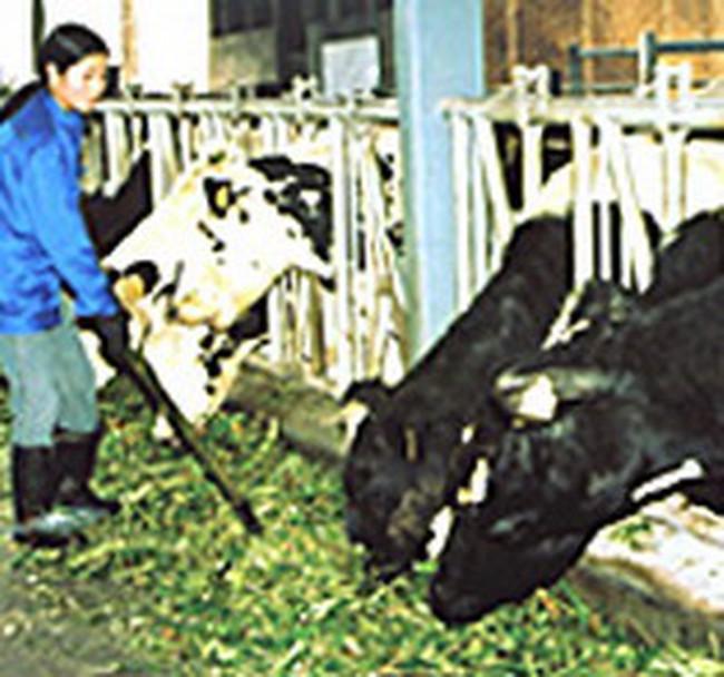 Công ty Australia đầu tư dự án sữa tại Tuyên Quang