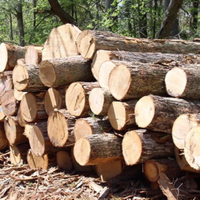 Kim ngạch xuất khẩu gỗ 8 tháng đầu năm đạt 1,82 tỷ
